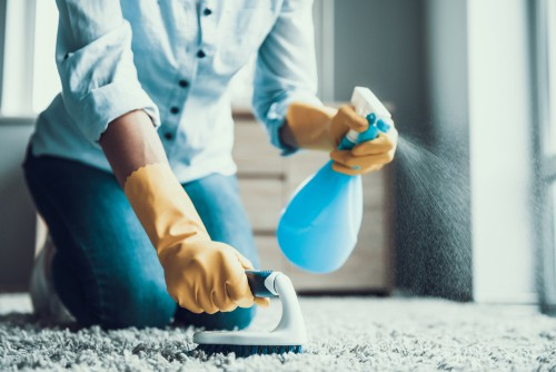 How To Remove Mold Smell from Carpet?
